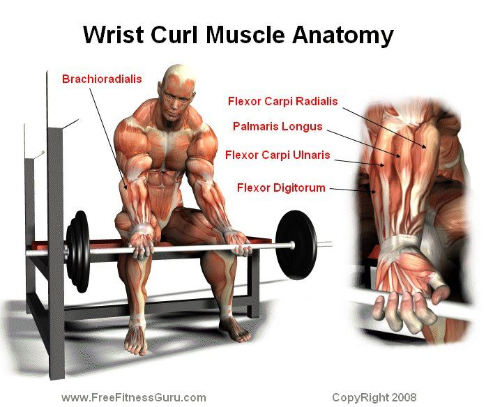 What are the Benefits of Wrist Curls? - Wrist Curl Muscle Anatomy